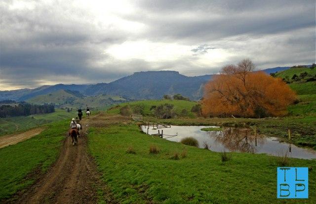 Horse Trekking in River Valley