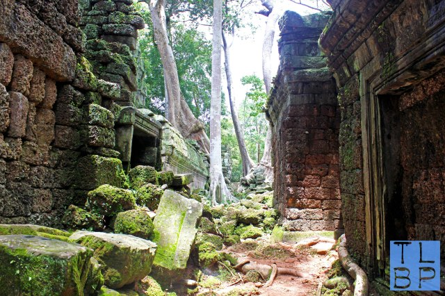 Ta Prohm aka Tomb Raider